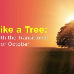 Be Like a Tree: Flow with the Transitional Energy of October